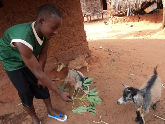 Michael feeds his goats after school