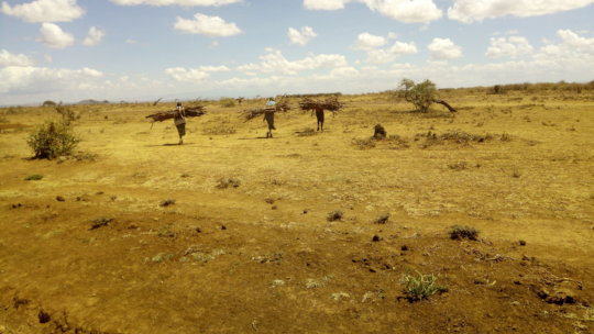 Effects of deforestration in marginalised areas