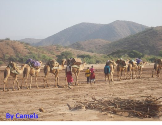 Camel mobile strategy