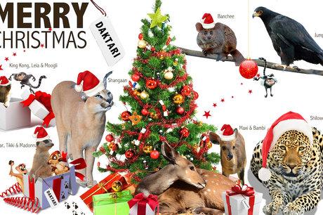 Christmas Gift - Donate for An Animal