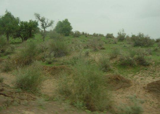 First Rain spell in Tharparkar brings life hope