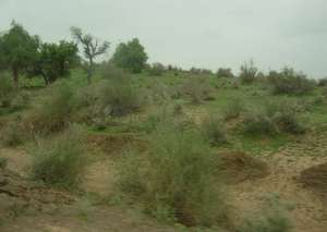 First Rain spell in Tharparkar brings life hope