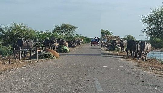 Farmers living on roads