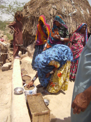 women planted vegetable seeds at her house