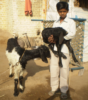 Aniket with a newborn she-goat