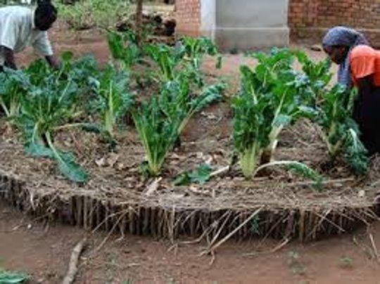 Help 50 mothers set up kitchen gardens in Uganda