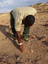 Tracker Spots a Rhino Footprint