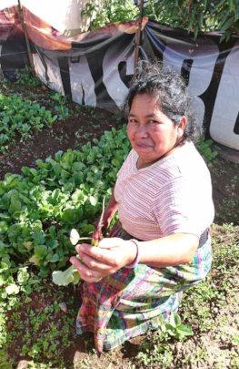 Thinning the Radishes - Tecpan Women's Group