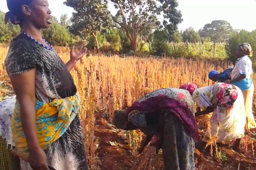 A gardener talks about issues with her harvest