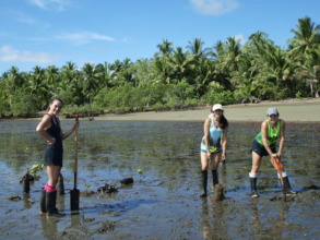 Build a nursery in the mangrove is not easy