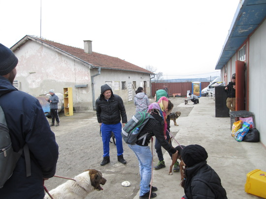 Our volunteers walking the dogs from the shelter