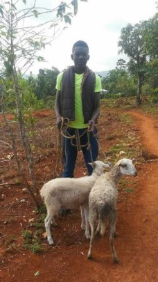 Sheep to families in remote Pestel