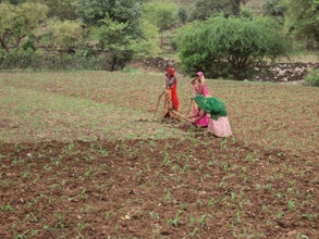 Women farmer growing ginger crop