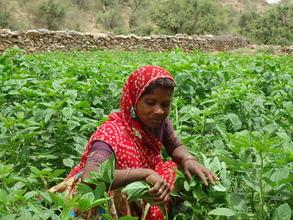 Women working in field.