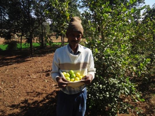 Yield of lemons from a Farmer