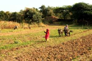 Farmer working on his field in southern Rajasthan