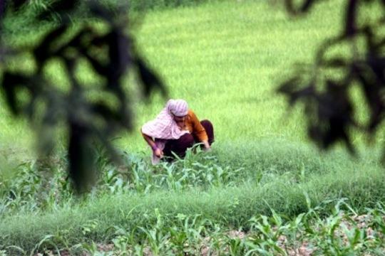 Women working in the field