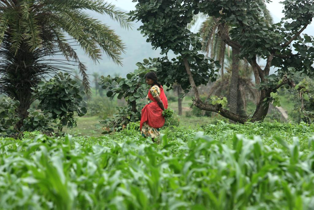 Sita working in her field