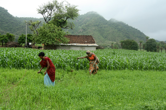 Improving Food Security for Tribal Farmers