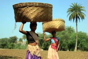 Women taking vegetables from the farm