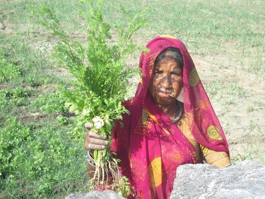 Dalu with her coriander crop