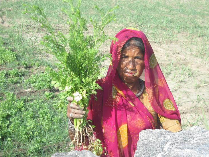 Dalu with her coriander crop