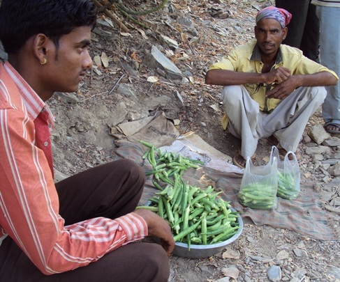 Okra grown and now selling