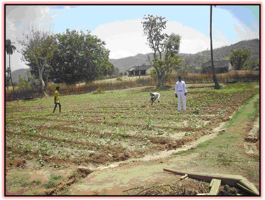 Farmers working in their field
