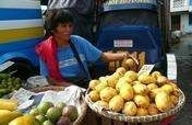Organic Mangoes in the Philippines