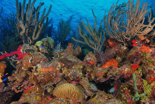 Improve Laws to Protect Corals in Latin America