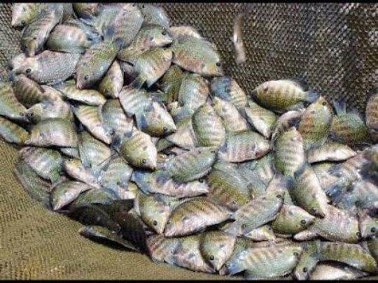 Talim Island Aquaculture