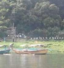 Talim Island Lakeshore