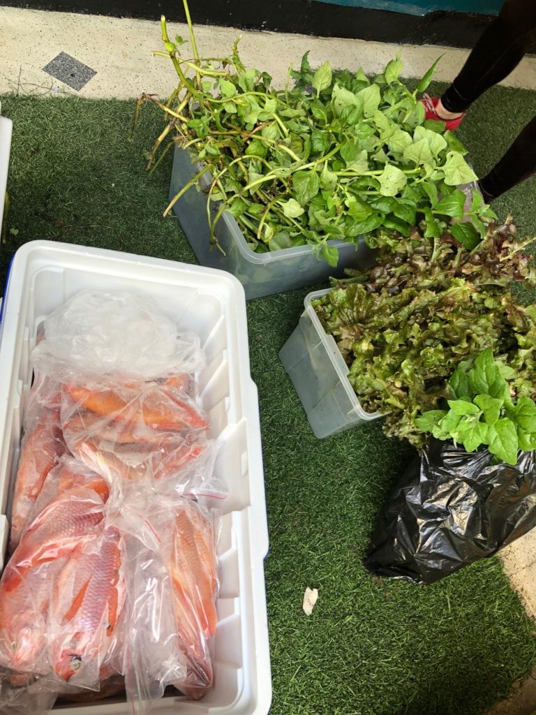 aquaponics fish and plants production