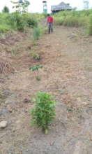 Medicinal garden pathway