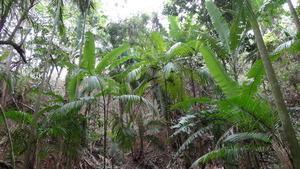 Agroforestry plantation.