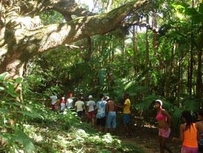 Rainforest trail.
