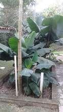 Evapoatranspiration bed sewage system.