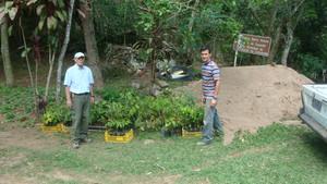 First lot of 500 tree seedlings.