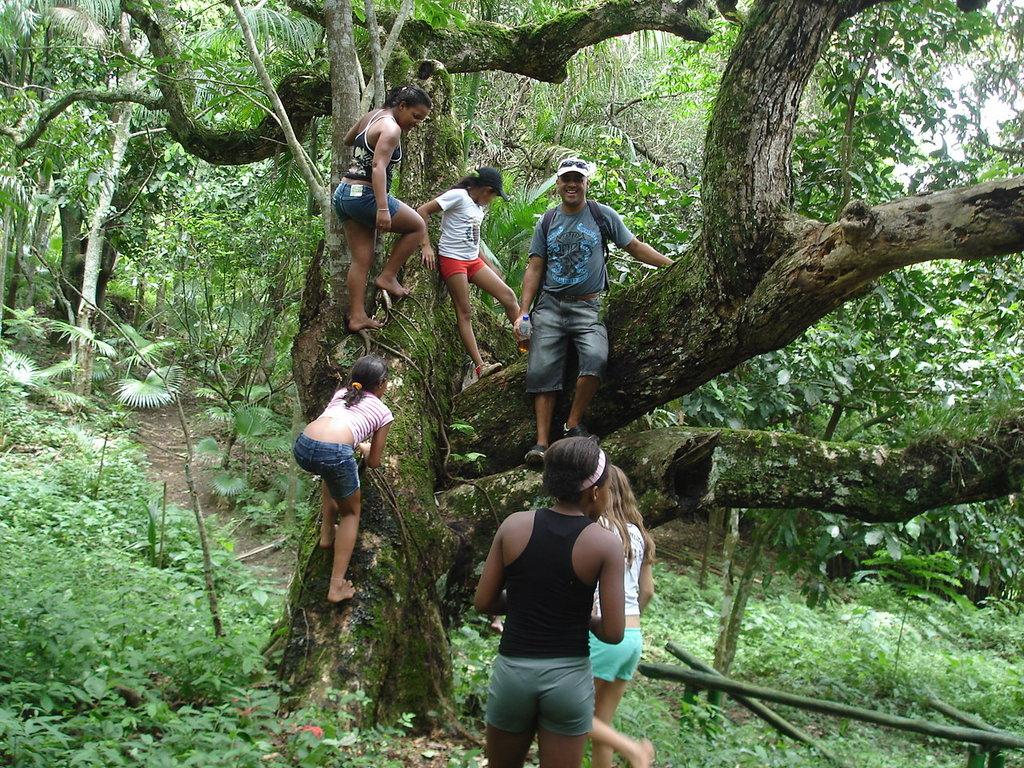 The old Mango tree.