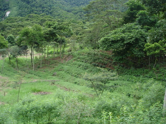 Agroforestry plots and tree corridor.