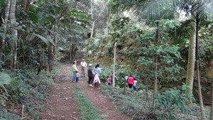 Part of group by old coffee farm wall.