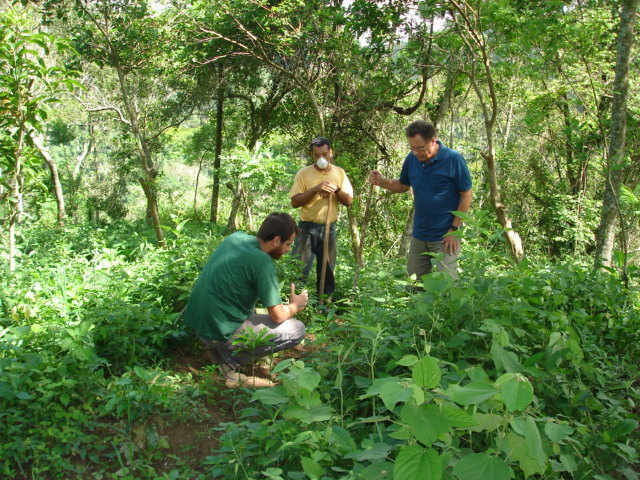 The agronomist teaching farm workers how to apply organic fertil