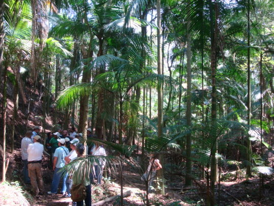 Palm trees planted in agroforestry experiment