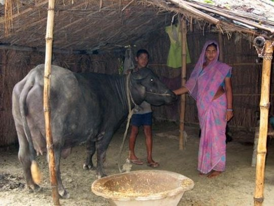 Sunita Devi with her son and her buffalo
