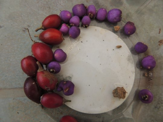 Rainforest fruit seed collection activity