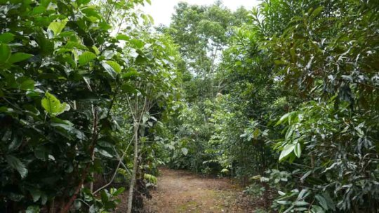 Walking track through the healthy young rainforest