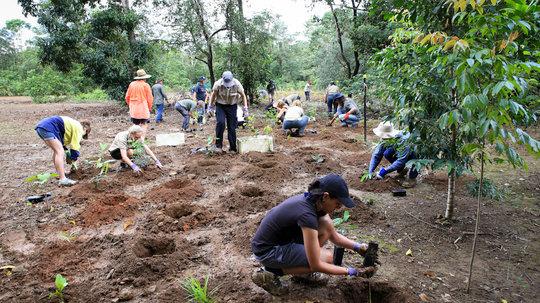volunteers planting rainforest trees