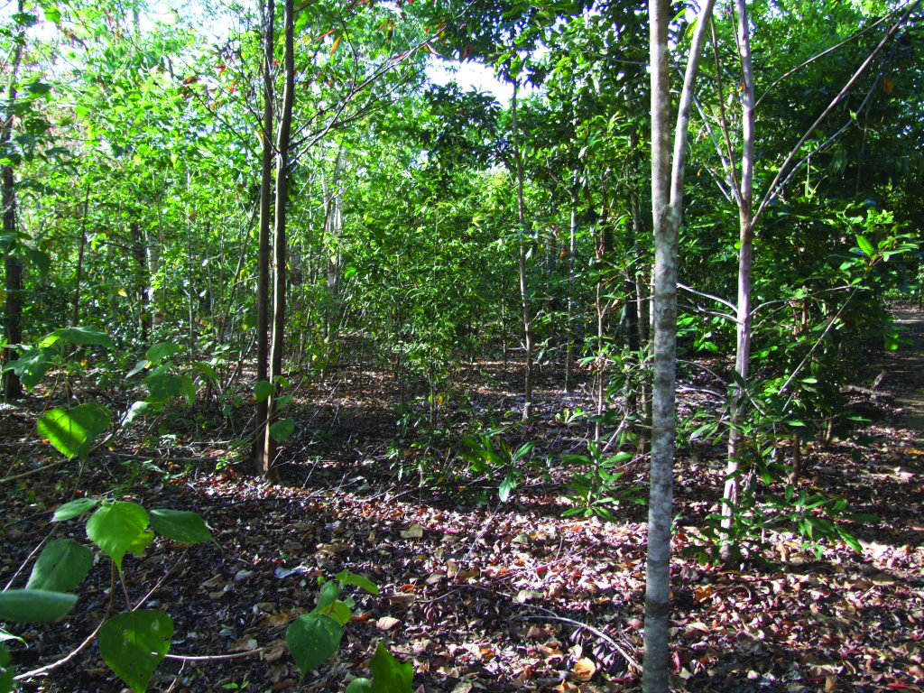 Create a Nature Conservation Reserve on Lot 46