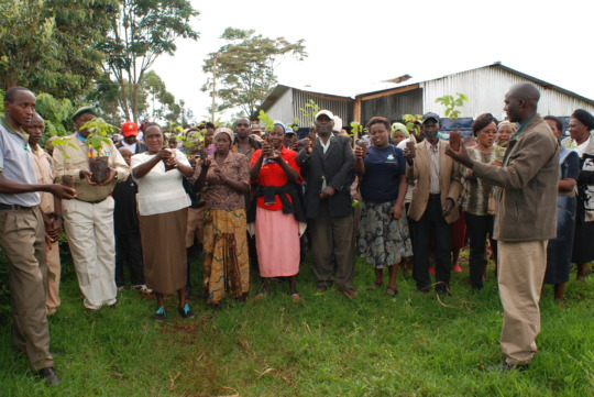 Farmers showing off their agroforestry seedlings
