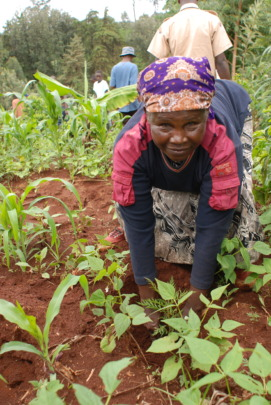 A farmer planting a fast-growing albizia tree